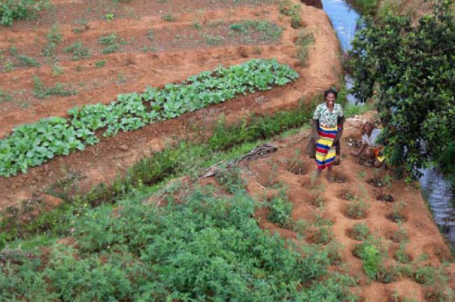 UN concerned by rising food insecurity in Madagascar