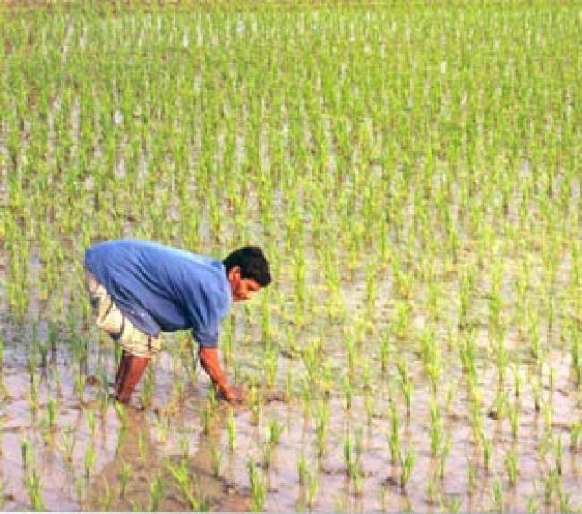 NRRI research to benefit rice farmers say union agriculture minister