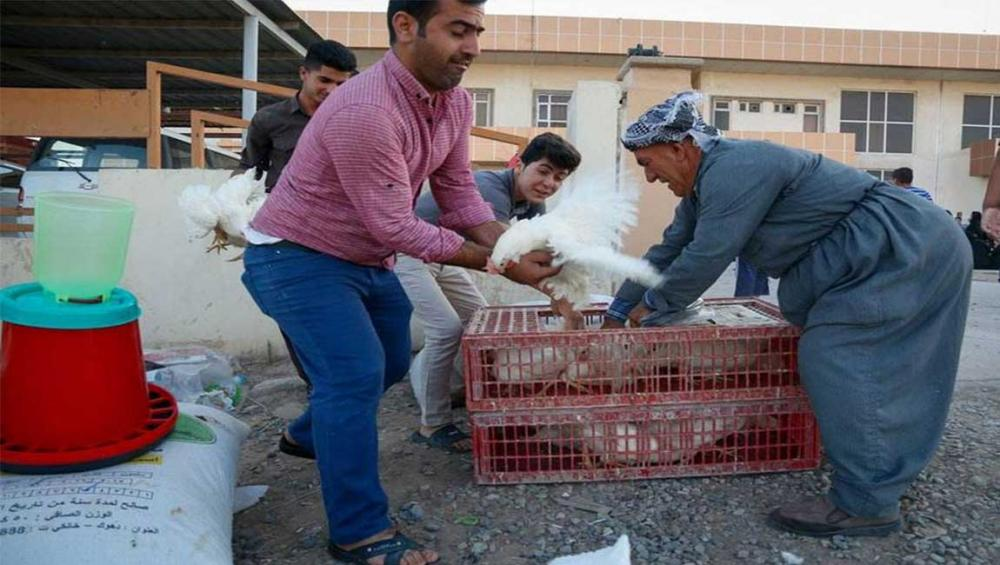 Bees, hens and greenhouses help restore livelihoods in Iraq – UN agriculture agency