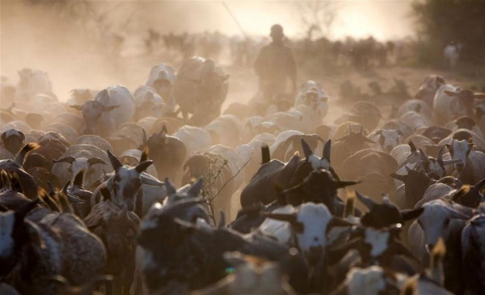UN appeals for nearly $170 million to aid pastoralists in northern Kenya