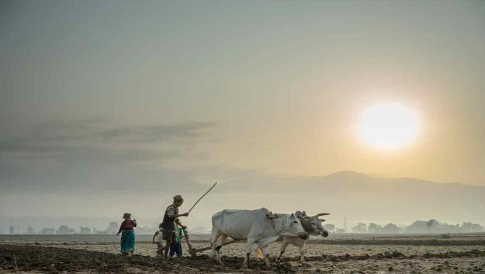 New UN agency projects to boost farming practices, improve farm animal health