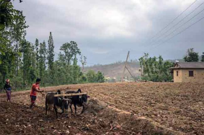 Business-as-usual not an option with future global food security in jeopardy, cautions UN agency