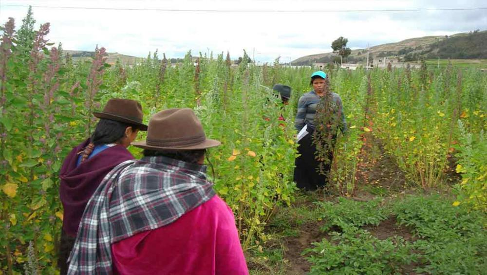 UN agency helps farmers in Latin America broaden their market horizons