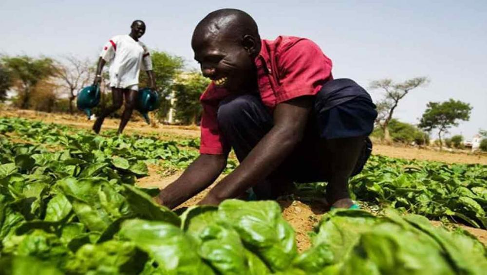 Ensuring family farmers' access to food key to tackling global hunger – UN agency