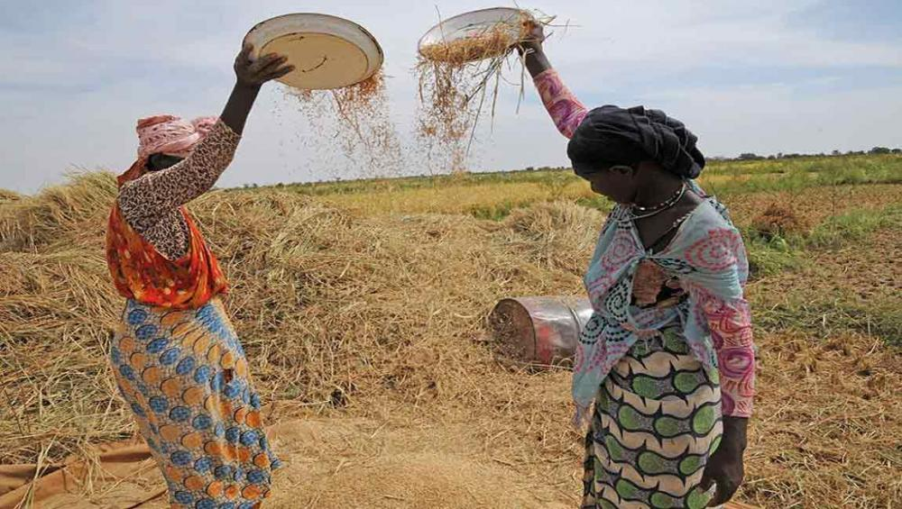 Global food prices fall in March as sugar and vegetable oils slide – UN