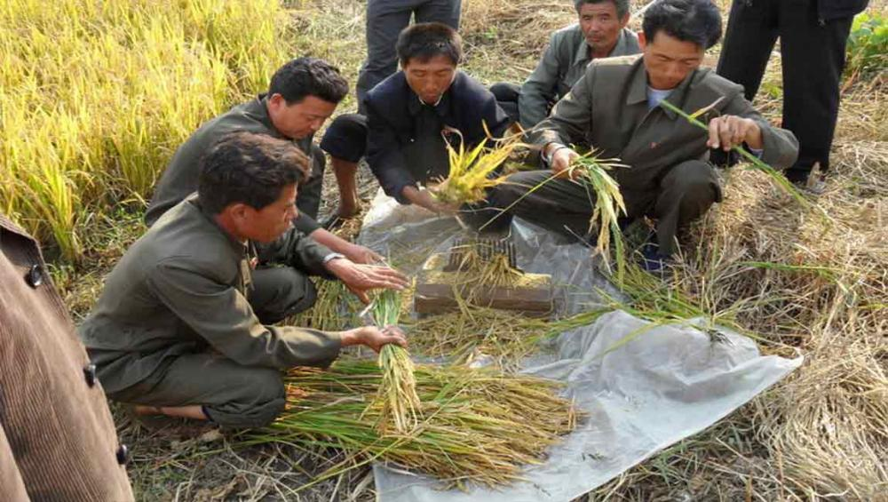 Drought in DPR Korea threatens food supply during ongoing lean season