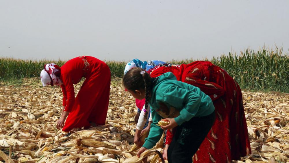 Crop yields are up in Syria, but higher prices still cause major strain: new UN report