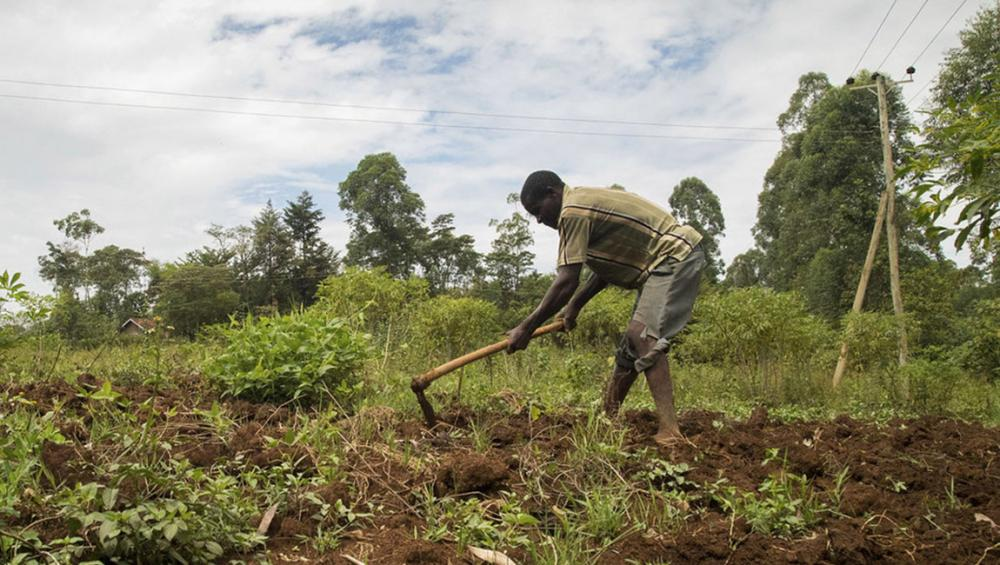 Help African farmers cope with climate change threats, UN food agency urges