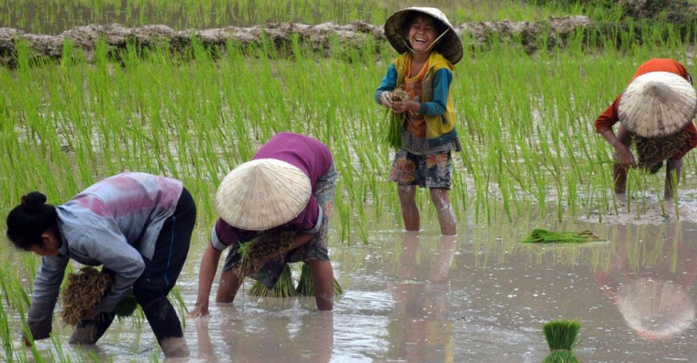 UN agency sounds alarm: Dwindling agrobiodiversity 'severe threat' to food security