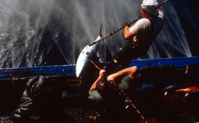 UN initiative to advance high seas fisheries management
