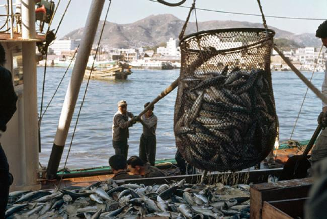 UN highlights growing role of aquaculture in providing jobs