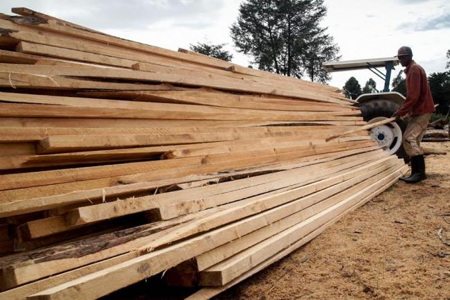 UN agency reports rises in wood production and demand for bioenergy