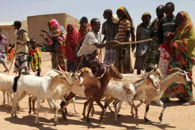 Agriculture support 'critical' for Horn of Africa as region braces for another hunger season