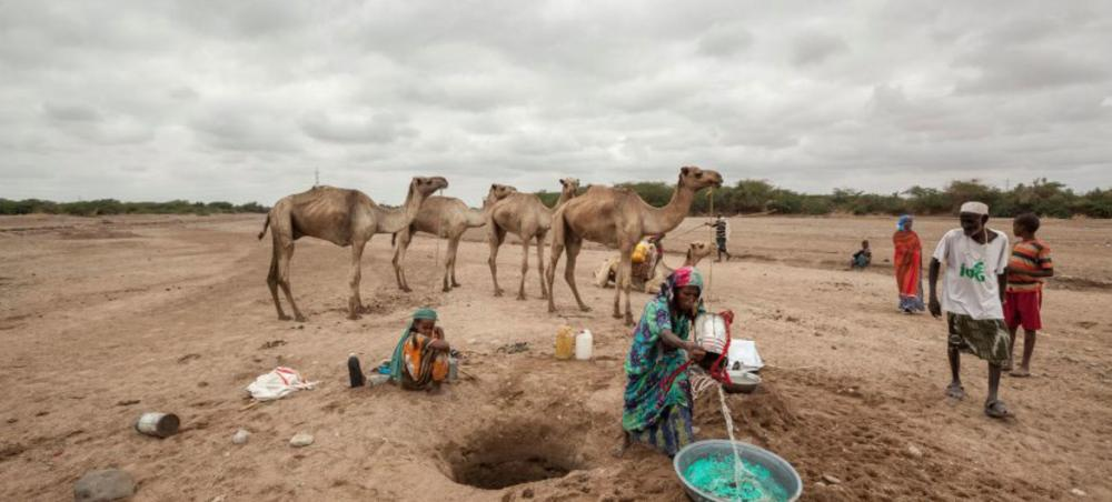 Preventive action could save billions of dollars in food assistance costs - UN agency