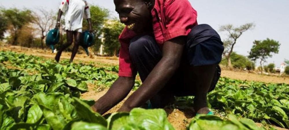 Food safety critical to development and ending poverty: FAO deputy chief