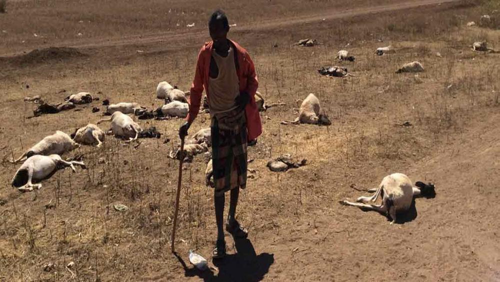 Somalia: Poor rains forecast put food security, livelihoods at risk, warns UN agency