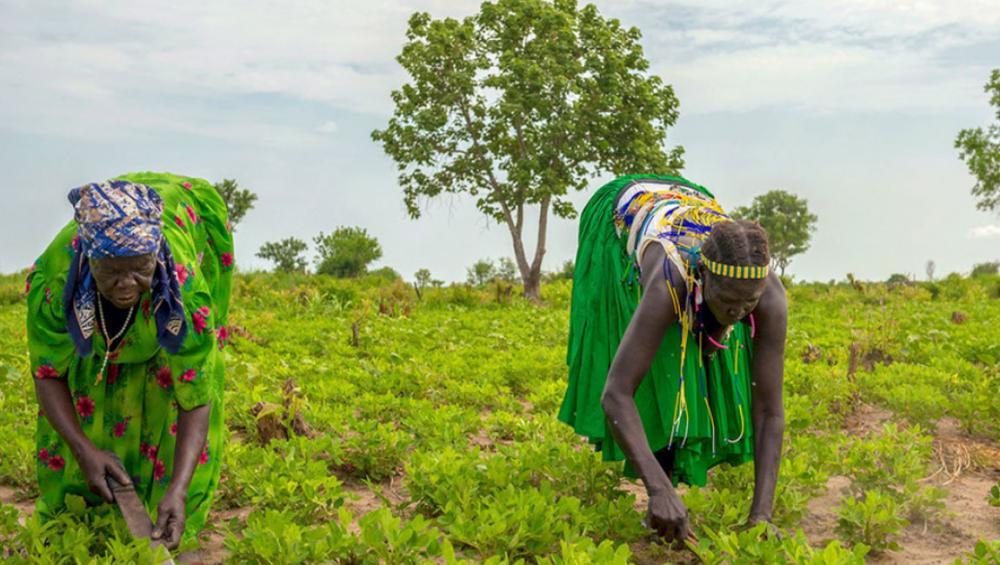 'Temporary Basic Income' could slow COVID surge, provide lifeline for world's poorest