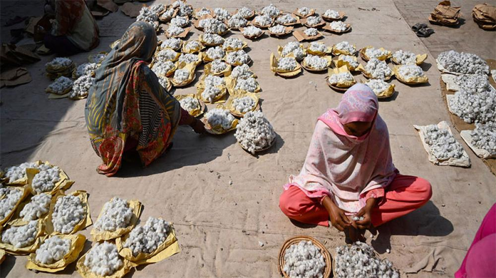 Cotton sustains more than 100 million families worldwide
