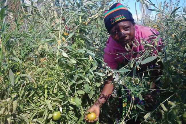 Climate change adaptation can help promote sub-Saharan African livelihoods: UN report