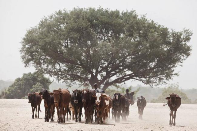 In fight against hunger, UN launches initiative targeting threat of desertification