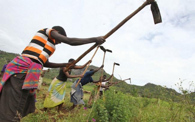 Agriculture to help eradicate hunger in Africa: UN