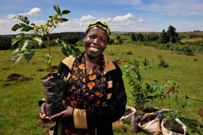 UN calls for boosting resources for world's forests