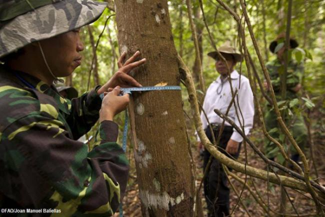 UN launches 'game-changer' software to help developing countries monitor forests