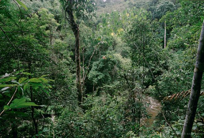 UN urges focus on potential of forests to reduce poverty, spur green development