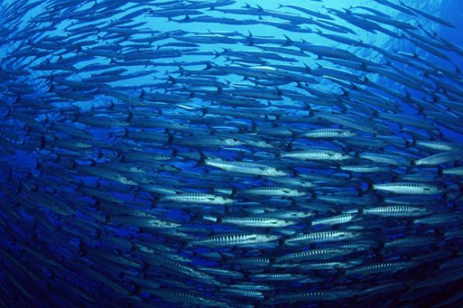 SAMOA: New partnerships seek to protect world's oceans