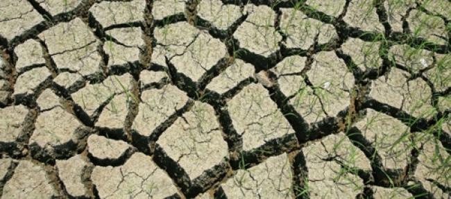 Growing demand for cropland threatens environment: UN