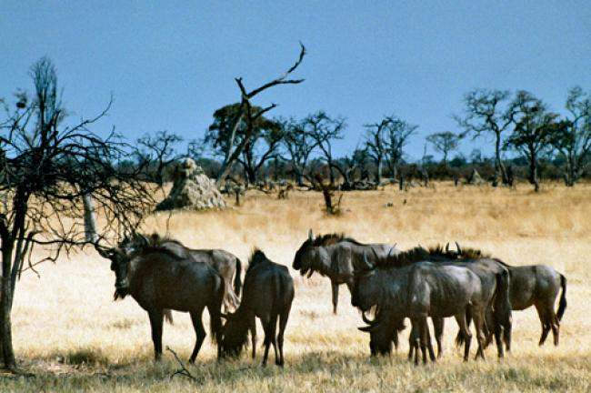 UN adopts new global platform to tackle wildlife