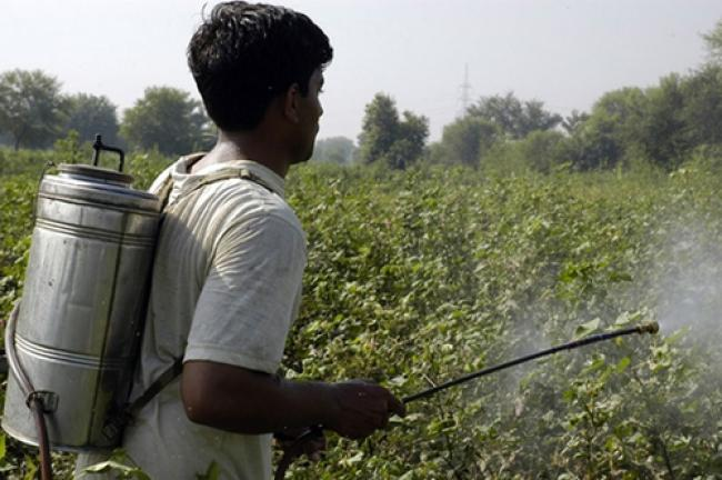 UN to reduce risks from pesticides in Belarus