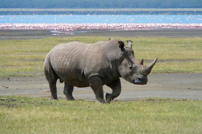 It's time to get serious about wildlife crime: UN