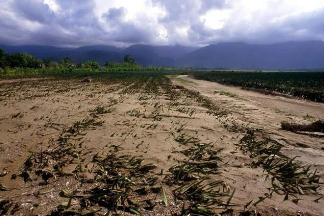 Climate change poses 'major threat' to food security, warns UN expert