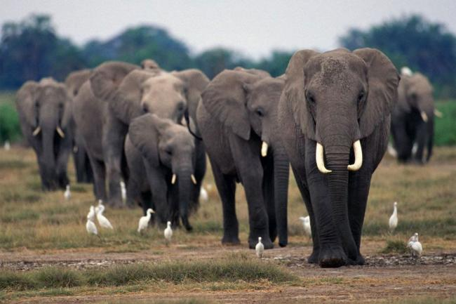 Cooperation vital to combating wildlife crime: UN Assembly President