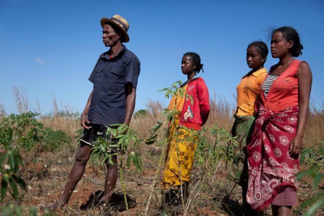 Madagascar needs resources to continue battle against locust plague – UN agency