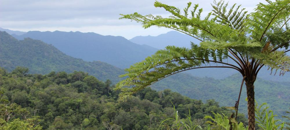 New UN agency guidelines aim to sustain forest benefits for future generations