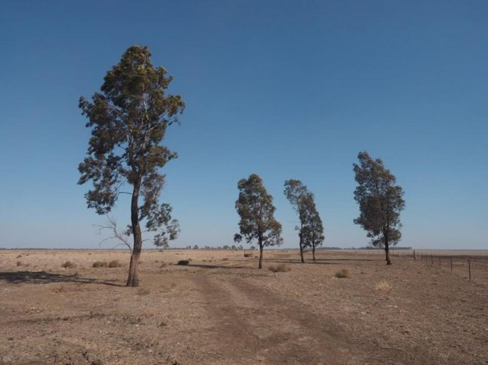Entire New South Wales now drought affected: Government