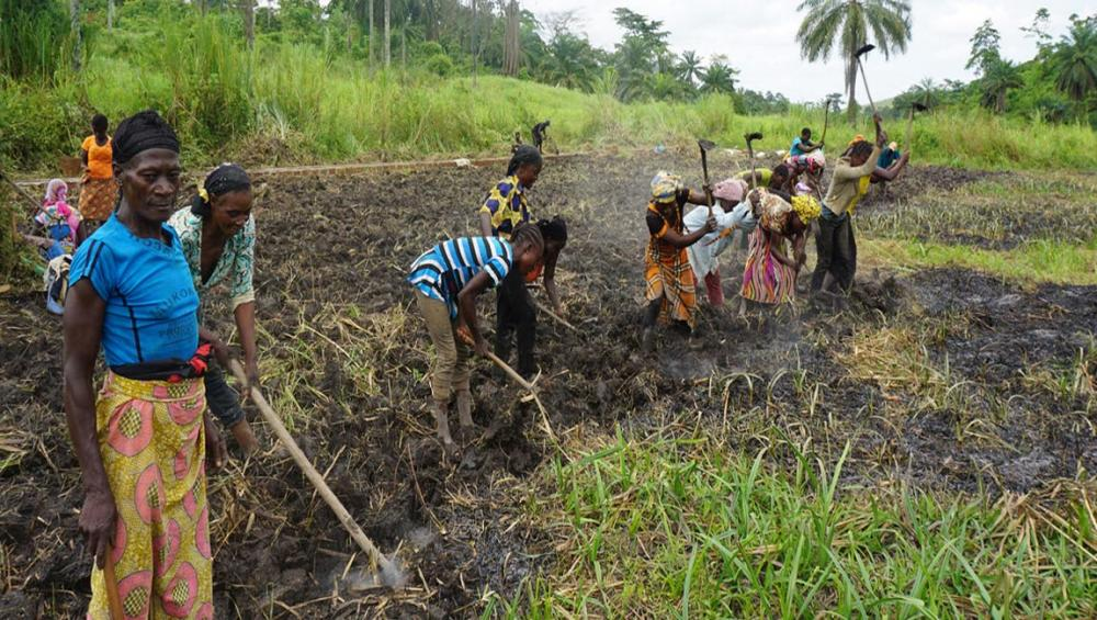 Congo Prospers from Environmental Protection