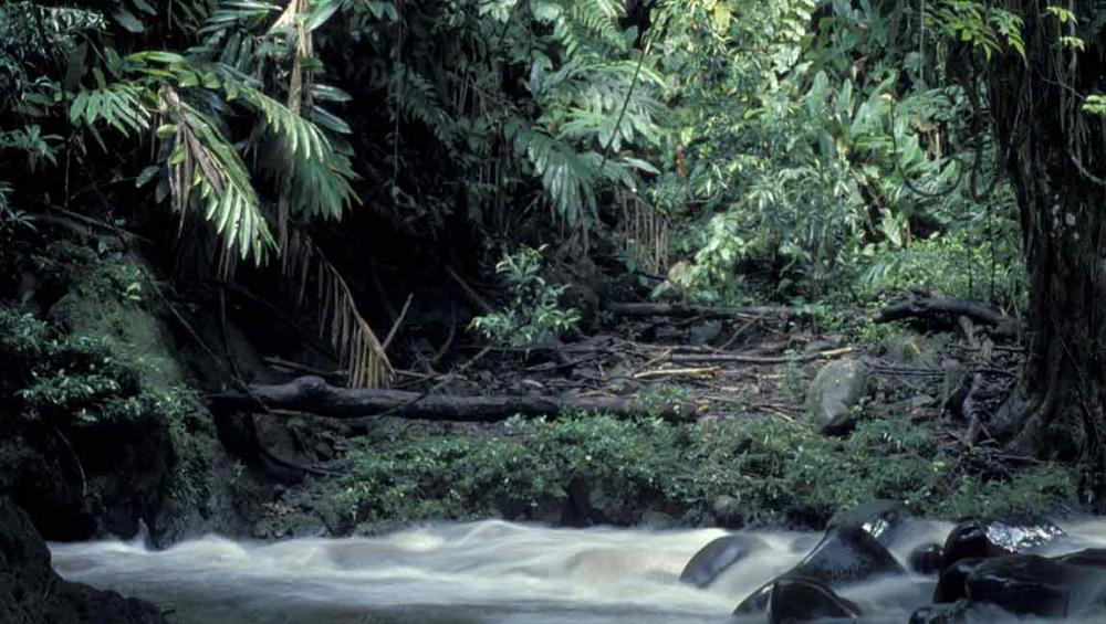 Major reports on biodiversity, ecosystem services to be launched at UN-backed meeting in Medellin