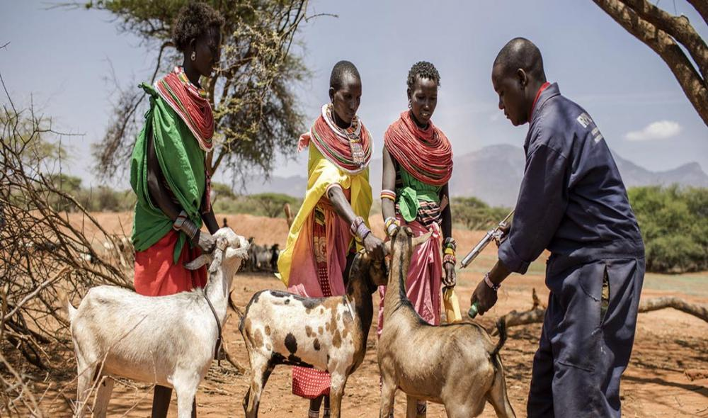 Backed by UN agency, countries set to take on deadly livestock-killing disease