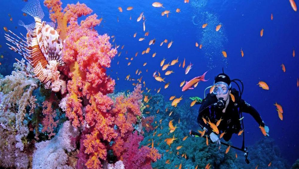 Coral reefs can't wait for world to take action, urges UN, as Biodiversity Conference gets underway