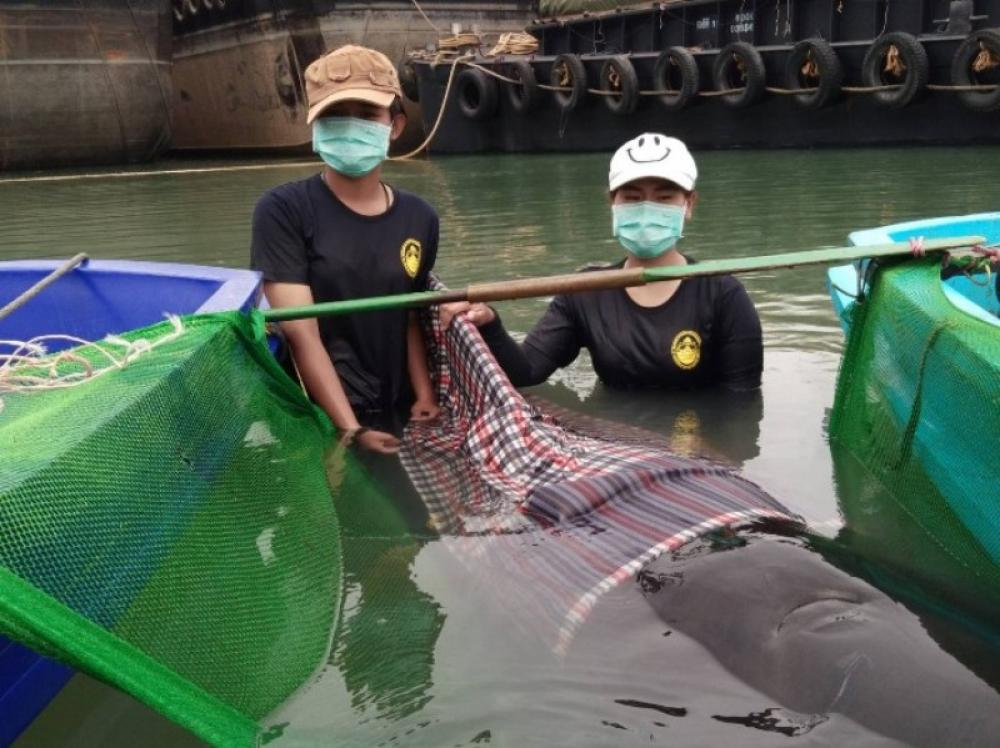 Thailand: Whale dies after consuming 80 plastic bags