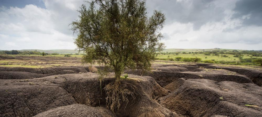 Soil erosion must be stopped 'to save our future', says UN agriculture agency