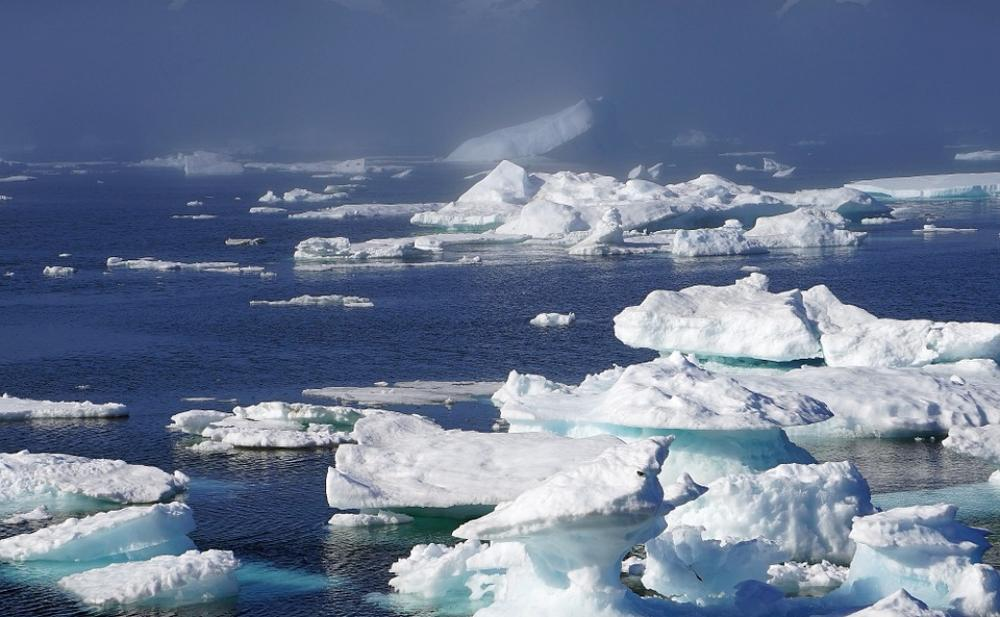 Melting Arctic Sea ice linked to emergence of deadly virus in marine mammals, says study