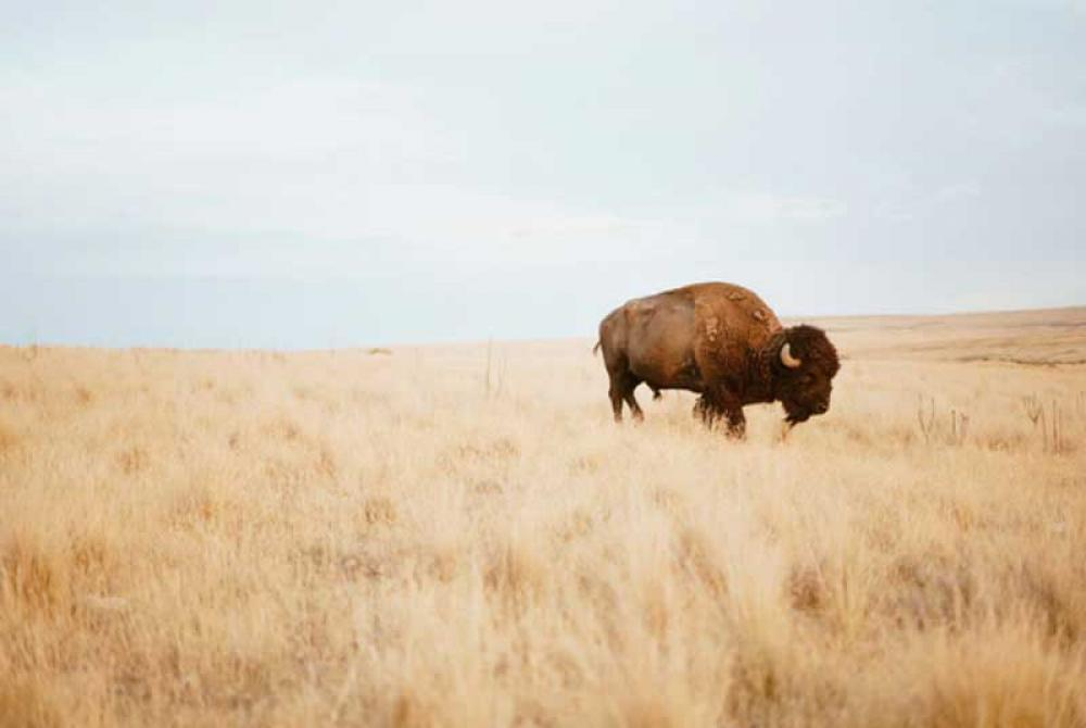 Namibia probes death of 16 buffaloes in national park