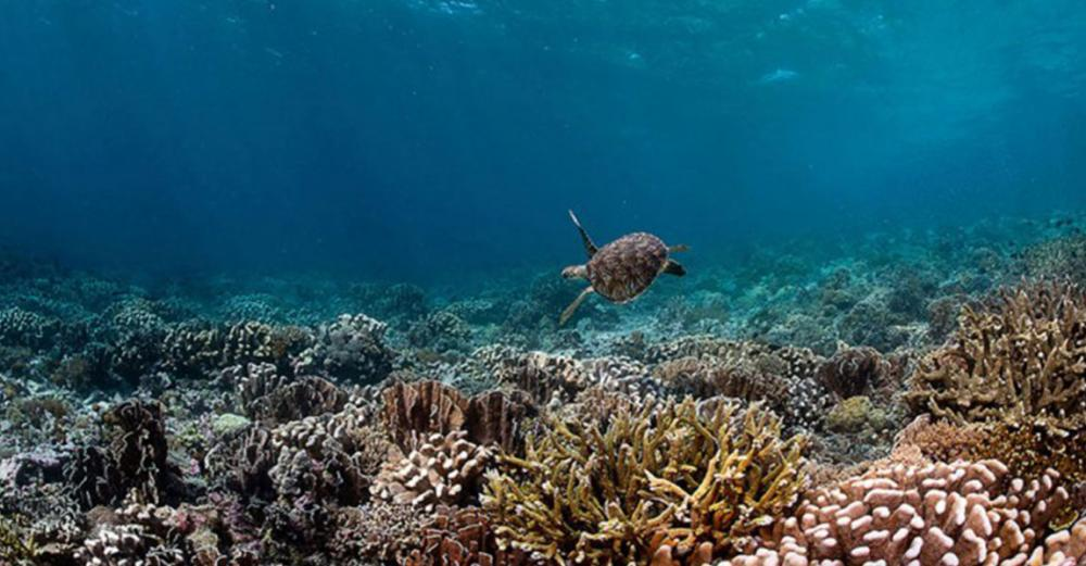 Ahead of biodiversity summit, UN officials call for action to preserve the natural world