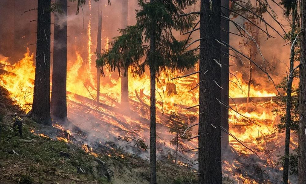 Australia wildfires: