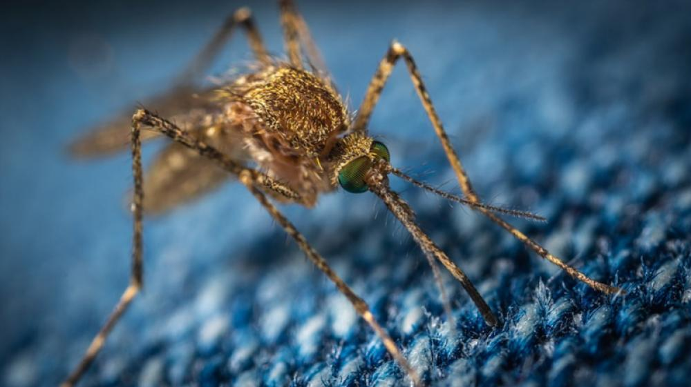 Drone Test yields breakthrough for use of nuclear technique to fight mosquitoes - IAEA Study