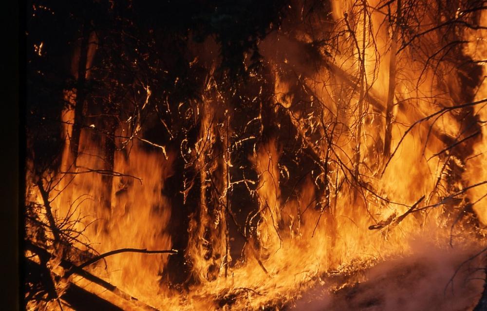 Bushfire crisis: Thousands protest in Australia